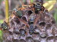Есть ли польза от укуса пчелы
