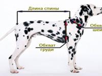 Как определить размер одежды собаки