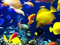 К чему снится рыба живая