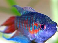 К чему снится рыба мертвая