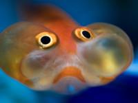 К чему снится рыба мужчине