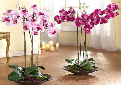 Субстрат-для-орхидей1_500x350